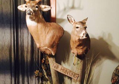 deer2_1
